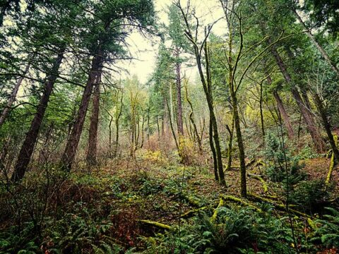 An image from Cascadia Plot 27, where the government of Cascadia is rumoured to hold evidence of alien life
